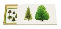 Деревья по виду листвы