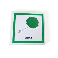 Трехчастные карточки «Строение листа»