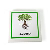 Трехчастные карточки «Строение дерева»
