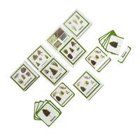 Трехчастные карточки «Растения-3»