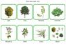 Растения по природным зонам