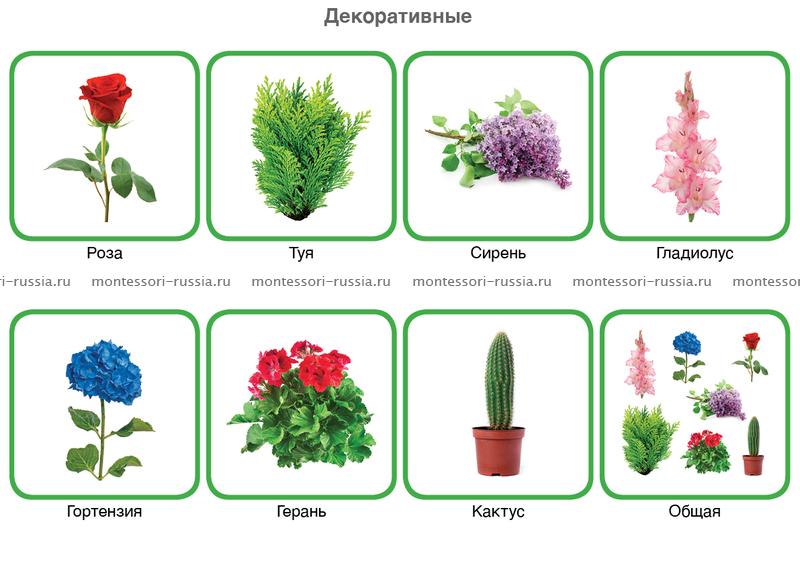 Фото Культурные Растения фото культурные растения