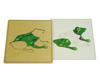 Строение лягушки (пазлы)