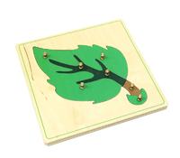 Строение листа (пазлы)