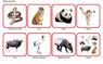 Животные по материкам и частям света