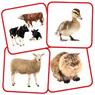 «Семья» животных